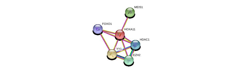 http://string-db.org/version_10/api/image/networkList?limit=0&targetmode=proteins&caller_identity=gene_cards&network_flavor=evidence&identifiers=9606.ENSP00000006015%0d%0a9606.ENSP00000272369%0d%0a9606.ENSP00000320147%0d%0a9606.ENSP00000262238%0d%0a9606.ENSP00000362649%0d%0a9606.ENSP00000368880%0d%0a