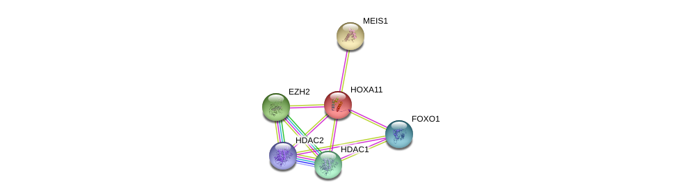 http://string-db.org/version_10/api/image/networkList?limit=0&targetmode=proteins&caller_identity=gene_cards&network_flavor=evidence&identifiers=9606.ENSP00000006015%0d%0a9606.ENSP00000272369%0d%0a9606.ENSP00000320147%0d%0a9606.ENSP00000430432%0d%0a9606.ENSP00000362649%0d%0a9606.ENSP00000368880%0d%0a