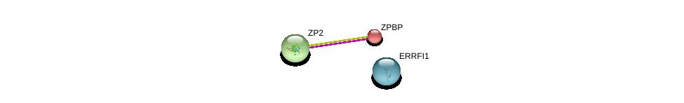 http://string-db.org/version_10/api/image/networkList?limit=0&targetmode=proteins&caller_identity=gene_cards&network_flavor=evidence&identifiers=9606.ENSP00000046087%0d%0a9606.ENSP00000219593%0d%0a9606.ENSP00000366702%0d%0a