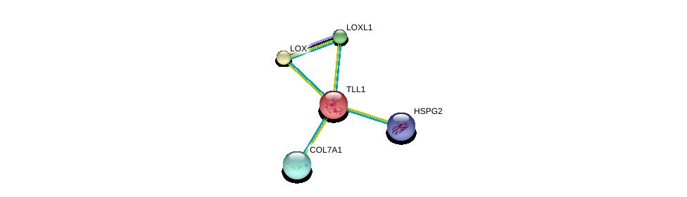 http://string-db.org/version_10/api/image/networkList?limit=0&targetmode=proteins&caller_identity=gene_cards&network_flavor=evidence&identifiers=9606.ENSP00000061240%0d%0a9606.ENSP00000363827%0d%0a9606.ENSP00000332371%0d%0a9606.ENSP00000332371%0d%0a9606.ENSP00000231004%0d%0a9606.ENSP00000261921%0d%0a