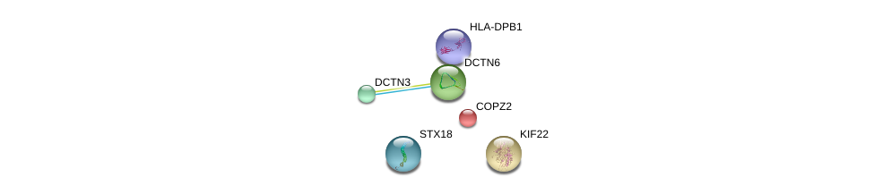 http://string-db.org/version_10/api/image/networkList?limit=0&targetmode=proteins&caller_identity=gene_cards&network_flavor=evidence&identifiers=9606.ENSP00000160827%0d%0a9606.ENSP00000408146%0d%0a9606.ENSP00000259632%0d%0a9606.ENSP00000006101%0d%0a9606.ENSP00000305810%0d%0a9606.ENSP00000221114%0d%0a