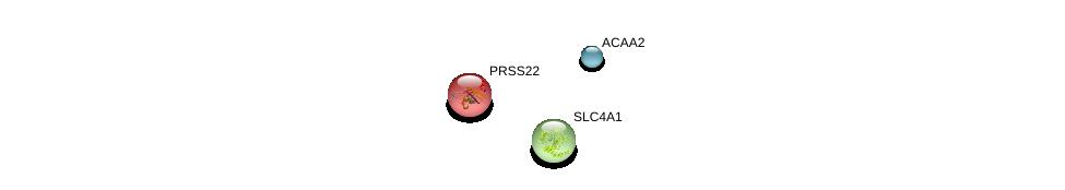 http://string-db.org/version_10/api/image/networkList?limit=0&targetmode=proteins&caller_identity=gene_cards&network_flavor=evidence&identifiers=9606.ENSP00000161006%0d%0a9606.ENSP00000285093%0d%0a9606.ENSP00000262418%0d%0a