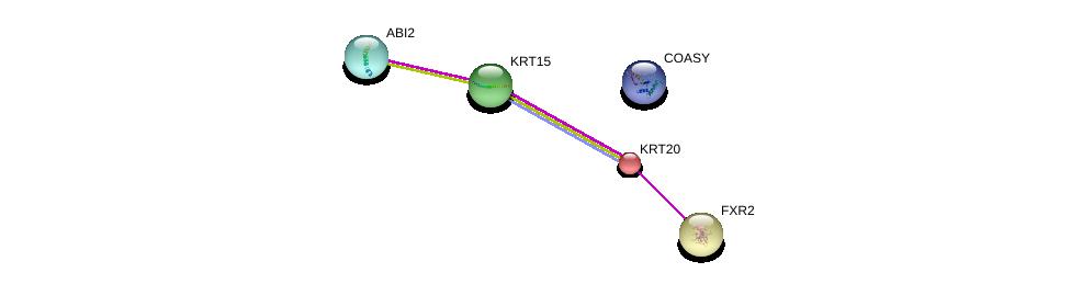 http://string-db.org/version_10/api/image/networkList?limit=0&targetmode=proteins&caller_identity=gene_cards&network_flavor=evidence&identifiers=9606.ENSP00000167588%0d%0a9606.ENSP00000250113%0d%0a9606.ENSP00000254043%0d%0a9606.ENSP00000254043%0d%0a9606.ENSP00000261017%0d%0a9606.ENSP00000464814%0d%0a
