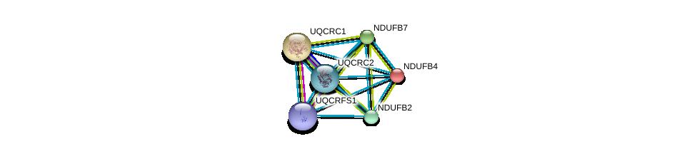 http://string-db.org/version_10/api/image/networkList?limit=0&targetmode=proteins&caller_identity=gene_cards&network_flavor=evidence&identifiers=9606.ENSP00000184266%0d%0a9606.ENSP00000203407%0d%0a9606.ENSP00000215565%0d%0a9606.ENSP00000247866%0d%0a9606.ENSP00000268379%0d%0a9606.ENSP00000306397%0d%0a