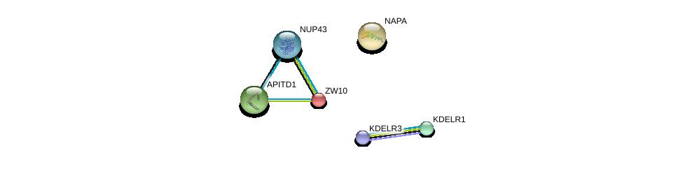 http://string-db.org/version_10/api/image/networkList?limit=0&targetmode=proteins&caller_identity=gene_cards&network_flavor=evidence&identifiers=9606.ENSP00000200135%0d%0a9606.ENSP00000263354%0d%0a9606.ENSP00000308583%0d%0a9606.ENSP00000386918%0d%0a9606.ENSP00000342262%0d%0a9606.ENSP00000329471%0d%0a