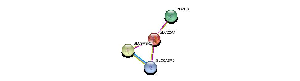 http://string-db.org/version_10/api/image/networkList?limit=0&targetmode=proteins&caller_identity=gene_cards&network_flavor=evidence&identifiers=9606.ENSP00000200652%0d%0a9606.ENSP00000262613%0d%0a9606.ENSP00000408005%0d%0a9606.ENSP00000347742%0d%0a