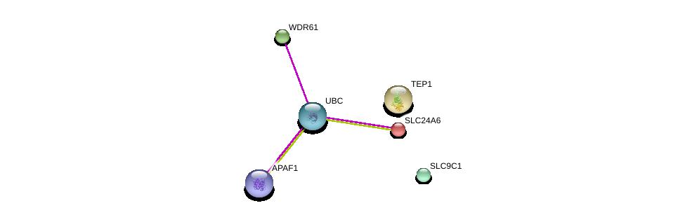 http://string-db.org/version_10/api/image/networkList?limit=0&targetmode=proteins&caller_identity=gene_cards&network_flavor=evidence&identifiers=9606.ENSP00000202831%0d%0a9606.ENSP00000344818%0d%0a9606.ENSP00000267973%0d%0a9606.ENSP00000448165%0d%0a9606.ENSP00000262715%0d%0a9606.ENSP00000306627%0d%0a