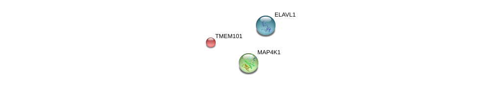 http://string-db.org/version_10/api/image/networkList?limit=0&targetmode=proteins&caller_identity=gene_cards&network_flavor=evidence&identifiers=9606.ENSP00000206380%0d%0a9606.ENSP00000385269%0d%0a9606.ENSP00000380066%0d%0a