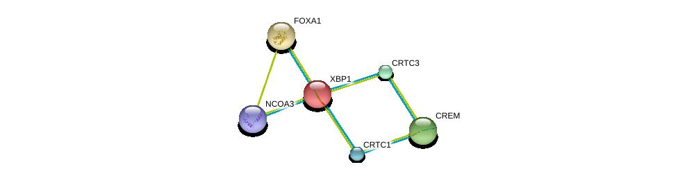 http://string-db.org/version_10/api/image/networkList?limit=0&targetmode=proteins&caller_identity=gene_cards&network_flavor=evidence&identifiers=9606.ENSP00000216037%0d%0a9606.ENSP00000250448%0d%0a9606.ENSP00000361066%0d%0a9606.ENSP00000265372%0d%0a9606.ENSP00000268184%0d%0a9606.ENSP00000345001%0d%0a