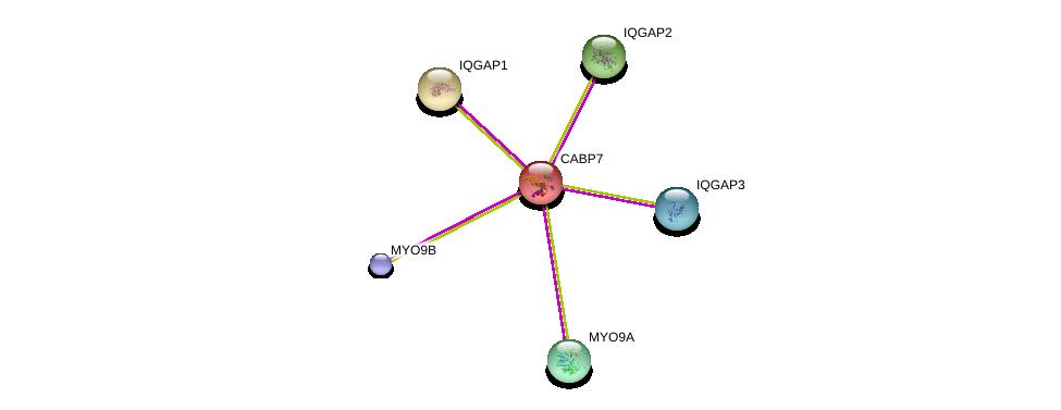 http://string-db.org/version_10/api/image/networkList?limit=0&targetmode=proteins&caller_identity=gene_cards&network_flavor=evidence&identifiers=9606.ENSP00000216144%0d%0a9606.ENSP00000348349%0d%0a9606.ENSP00000380444%0d%0a9606.ENSP00000274364%0d%0a9606.ENSP00000268182%0d%0a9606.ENSP00000354451%0d%0a