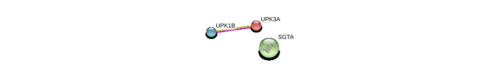 http://string-db.org/version_10/api/image/networkList?limit=0&targetmode=proteins&caller_identity=gene_cards&network_flavor=evidence&identifiers=9606.ENSP00000216211%0d%0a9606.ENSP00000264234%0d%0a9606.ENSP00000221566%0d%0a