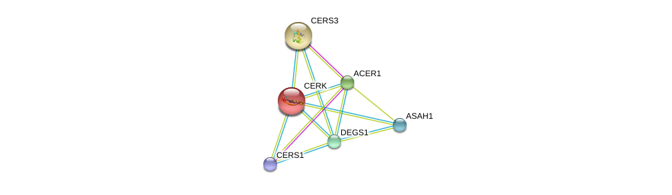 http://string-db.org/version_10/api/image/networkList?limit=0&targetmode=proteins&caller_identity=gene_cards&network_flavor=evidence&identifiers=9606.ENSP00000216264%0d%0a9606.ENSP00000402697%0d%0a9606.ENSP00000316476%0d%0a9606.ENSP00000284382%0d%0a9606.ENSP00000371152%0d%0a9606.ENSP00000301452%0d%0a