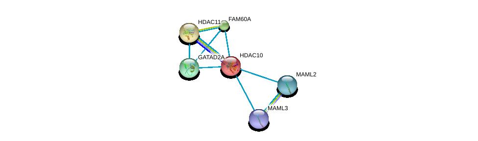http://string-db.org/version_10/api/image/networkList?limit=0&targetmode=proteins&caller_identity=gene_cards&network_flavor=evidence&identifiers=9606.ENSP00000216271%0d%0a9606.ENSP00000351552%0d%0a9606.ENSP00000295757%0d%0a9606.ENSP00000337477%0d%0a9606.ENSP00000412394%0d%0a9606.ENSP00000421180%0d%0a