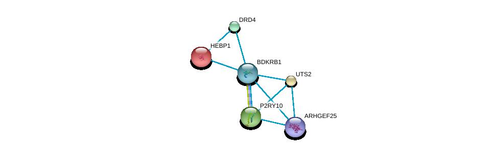 http://string-db.org/version_10/api/image/networkList?limit=0&targetmode=proteins&caller_identity=gene_cards&network_flavor=evidence&identifiers=9606.ENSP00000216629%0d%0a9606.ENSP00000335560%0d%0a9606.ENSP00000014930%0d%0a9606.ENSP00000054668%0d%0a9606.ENSP00000171757%0d%0a9606.ENSP00000176183%0d%0a