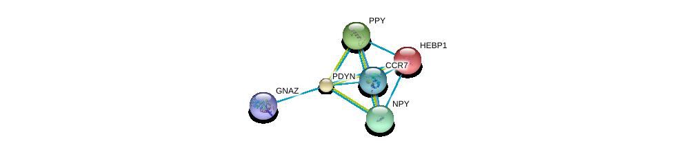 http://string-db.org/version_10/api/image/networkList?limit=0&targetmode=proteins&caller_identity=gene_cards&network_flavor=evidence&identifiers=9606.ENSP00000217305%0d%0a9606.ENSP00000014930%0d%0a9606.ENSP00000225992%0d%0a9606.ENSP00000242152%0d%0a9606.ENSP00000246657%0d%0a9606.ENSP00000248996%0d%0a