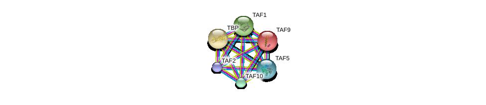 http://string-db.org/version_10/api/image/networkList?limit=0&targetmode=proteins&caller_identity=gene_cards&network_flavor=evidence&identifiers=9606.ENSP00000217893%0d%0a9606.ENSP00000367406%0d%0a9606.ENSP00000230354%0d%0a9606.ENSP00000299424%0d%0a9606.ENSP00000358854%0d%0a9606.ENSP00000276072%0d%0a