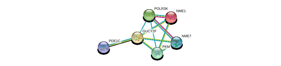 http://string-db.org/version_10/api/image/networkList?limit=0&targetmode=proteins&caller_identity=gene_cards&network_flavor=evidence&identifiers=9606.ENSP00000218006%0d%0a9606.ENSP00000379496%0d%0a9606.ENSP00000320171%0d%0a9606.ENSP00000013034%0d%0a9606.ENSP00000293860%0d%0a9606.ENSP00000356785%0d%0a