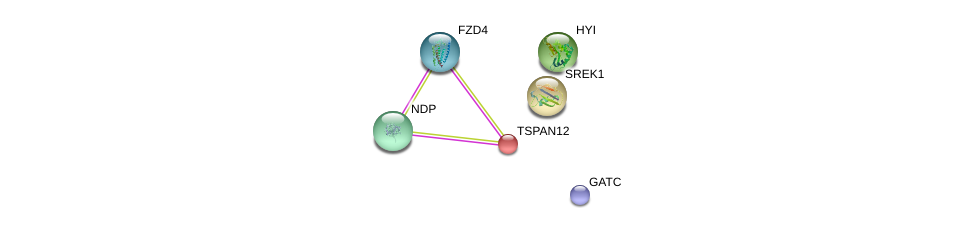 http://string-db.org/version_10/api/image/networkList?limit=0&targetmode=proteins&caller_identity=gene_cards&network_flavor=evidence&identifiers=9606.ENSP00000222747%0d%0a9606.ENSP00000446872%0d%0a9606.ENSP00000334538%0d%0a9606.ENSP00000434034%0d%0a9606.ENSP00000367301%0d%0a9606.ENSP00000361502%0d%0a