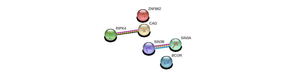 http://string-db.org/version_10/api/image/networkList?limit=0&targetmode=proteins&caller_identity=gene_cards&network_flavor=evidence&identifiers=9606.ENSP00000223210%0d%0a9606.ENSP00000353622%0d%0a9606.ENSP00000369131%0d%0a9606.ENSP00000367705%0d%0a9606.ENSP00000264705%0d%0a9606.ENSP00000332454%0d%0a