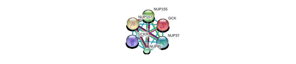 http://string-db.org/version_10/api/image/networkList?limit=0&targetmode=proteins&caller_identity=gene_cards&network_flavor=evidence&identifiers=9606.ENSP00000223366%0d%0a9606.ENSP00000264717%0d%0a9606.ENSP00000229179%0d%0a9606.ENSP00000231498%0d%0a9606.ENSP00000245544%0d%0a9606.ENSP00000251074%0d%0a