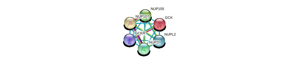 http://string-db.org/version_10/api/image/networkList?limit=0&targetmode=proteins&caller_identity=gene_cards&network_flavor=evidence&identifiers=9606.ENSP00000223366%0d%0a9606.ENSP00000264717%0d%0a9606.ENSP00000251074%0d%0a9606.ENSP00000231498%0d%0a9606.ENSP00000229179%0d%0a9606.ENSP00000258742%0d%0a