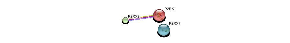 http://string-db.org/version_10/api/image/networkList?limit=0&targetmode=proteins&caller_identity=gene_cards&network_flavor=evidence&identifiers=9606.ENSP00000225538%0d%0a9606.ENSP00000343339%0d%0a9606.ENSP00000442349%0d%0a