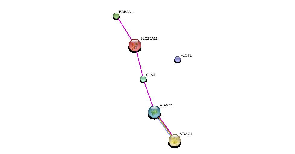 http://string-db.org/version_10/api/image/networkList?limit=0&targetmode=proteins&caller_identity=gene_cards&network_flavor=evidence&identifiers=9606.ENSP00000225665%0d%0a9606.ENSP00000365569%0d%0a9606.ENSP00000353073%0d%0a9606.ENSP00000352408%0d%0a9606.ENSP00000265333%0d%0a9606.ENSP00000361635%0d%0a