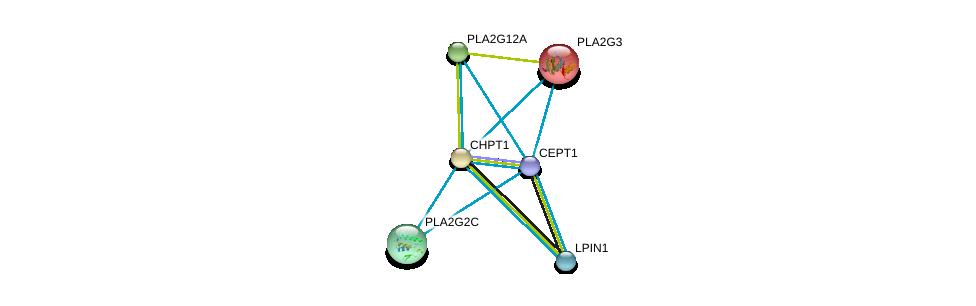 http://string-db.org/version_10/api/image/networkList?limit=0&targetmode=proteins&caller_identity=gene_cards&network_flavor=evidence&identifiers=9606.ENSP00000229266%0d%0a9606.ENSP00000349696%0d%0a9606.ENSP00000215885%0d%0a9606.ENSP00000243501%0d%0a9606.ENSP00000247992%0d%0a9606.ENSP00000256720%0d%0a