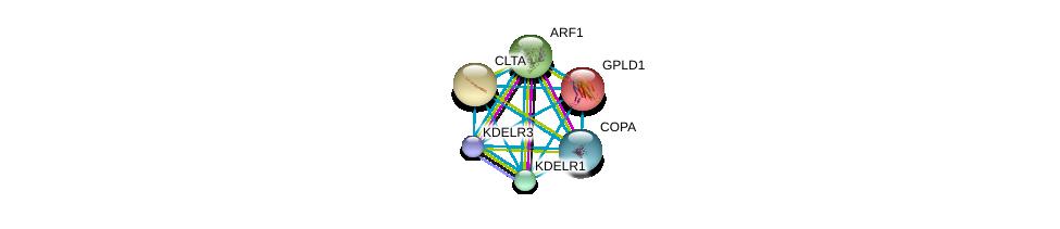 http://string-db.org/version_10/api/image/networkList?limit=0&targetmode=proteins&caller_identity=gene_cards&network_flavor=evidence&identifiers=9606.ENSP00000230036%0d%0a9606.ENSP00000386918%0d%0a9606.ENSP00000329471%0d%0a9606.ENSP00000272102%0d%0a9606.ENSP00000242285%0d%0a9606.ENSP00000357048%0d%0a