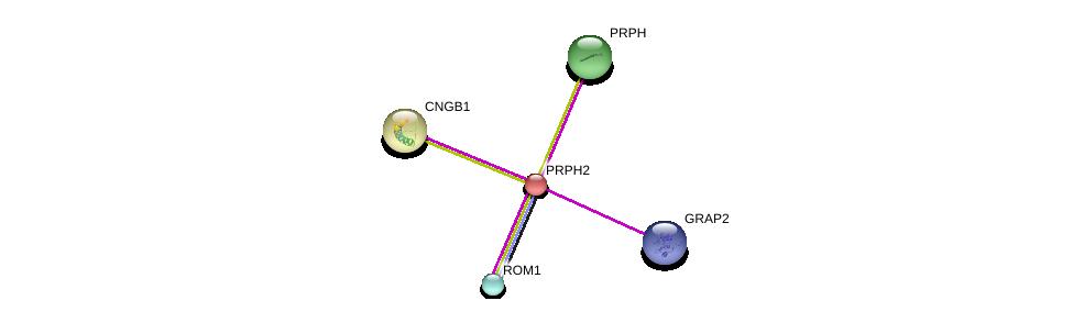 http://string-db.org/version_10/api/image/networkList?limit=0&targetmode=proteins&caller_identity=gene_cards&network_flavor=evidence&identifiers=9606.ENSP00000230381%0d%0a9606.ENSP00000278833%0d%0a9606.ENSP00000257860%0d%0a9606.ENSP00000339186%0d%0a9606.ENSP00000251102%0d%0a