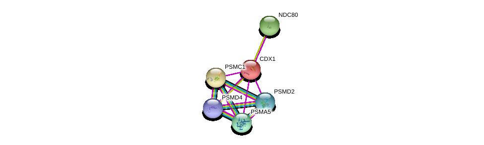 http://string-db.org/version_10/api/image/networkList?limit=0&targetmode=proteins&caller_identity=gene_cards&network_flavor=evidence&identifiers=9606.ENSP00000231656%0d%0a9606.ENSP00000310129%0d%0a9606.ENSP00000261303%0d%0a9606.ENSP00000357879%0d%0a9606.ENSP00000261597%0d%0a9606.ENSP00000271308%0d%0a