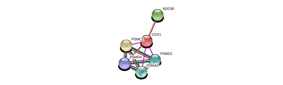 http://string-db.org/version_10/api/image/networkList?limit=0&targetmode=proteins&caller_identity=gene_cards&network_flavor=evidence&identifiers=9606.ENSP00000231656%0d%0a9606.ENSP00000310129%0d%0a9606.ENSP00000357879%0d%0a9606.ENSP00000271308%0d%0a9606.ENSP00000261597%0d%0a9606.ENSP00000261303%0d%0a