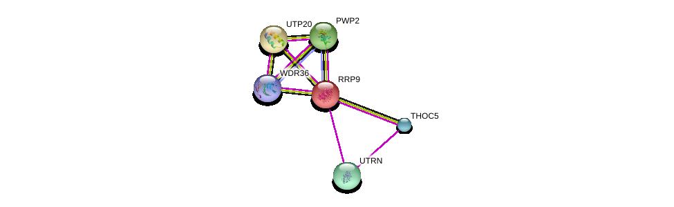 http://string-db.org/version_10/api/image/networkList?limit=0&targetmode=proteins&caller_identity=gene_cards&network_flavor=evidence&identifiers=9606.ENSP00000232888%0d%0a9606.ENSP00000291576%0d%0a9606.ENSP00000423067%0d%0a9606.ENSP00000380969%0d%0a9606.ENSP00000356515%0d%0a9606.ENSP00000261637%0d%0a