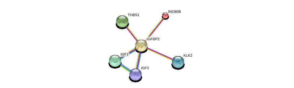 http://string-db.org/version_10/api/image/networkList?limit=0&targetmode=proteins&caller_identity=gene_cards&network_flavor=evidence&identifiers=9606.ENSP00000233809%0d%0a9606.ENSP00000391826%0d%0a9606.ENSP00000313581%0d%0a9606.ENSP00000302665%0d%0a9606.ENSP00000260356%0d%0a9606.ENSP00000233331%0d%0a