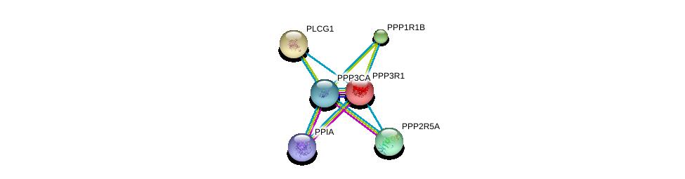 http://string-db.org/version_10/api/image/networkList?limit=0&targetmode=proteins&caller_identity=gene_cards&network_flavor=evidence&identifiers=9606.ENSP00000234310%0d%0a9606.ENSP00000378323%0d%0a9606.ENSP00000419425%0d%0a9606.ENSP00000244007%0d%0a9606.ENSP00000254079%0d%0a9606.ENSP00000261461%0d%0a