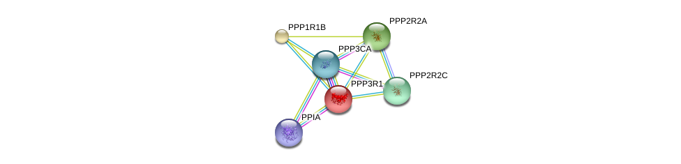 http://string-db.org/version_10/api/image/networkList?limit=0&targetmode=proteins&caller_identity=gene_cards&network_flavor=evidence&identifiers=9606.ENSP00000234310%0d%0a9606.ENSP00000378323%0d%0a9606.ENSP00000419425%0d%0a9606.ENSP00000254079%0d%0a9606.ENSP00000335083%0d%0a9606.ENSP00000325074%0d%0a