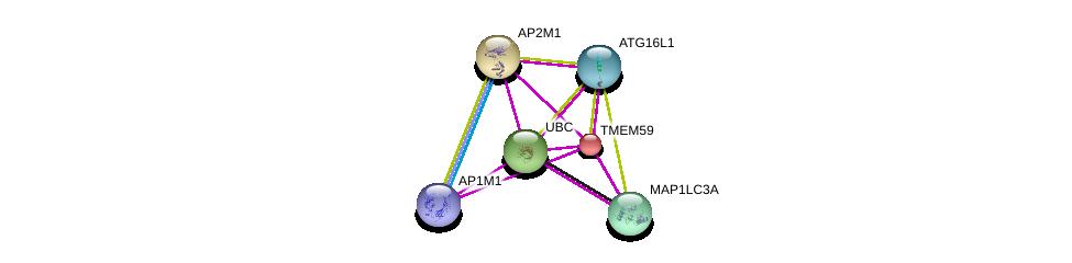 http://string-db.org/version_10/api/image/networkList?limit=0&targetmode=proteins&caller_identity=gene_cards&network_flavor=evidence&identifiers=9606.ENSP00000234831%0d%0a9606.ENSP00000344818%0d%0a9606.ENSP00000363970%0d%0a9606.ENSP00000375872%0d%0a9606.ENSP00000388996%0d%0a9606.ENSP00000292807%0d%0a