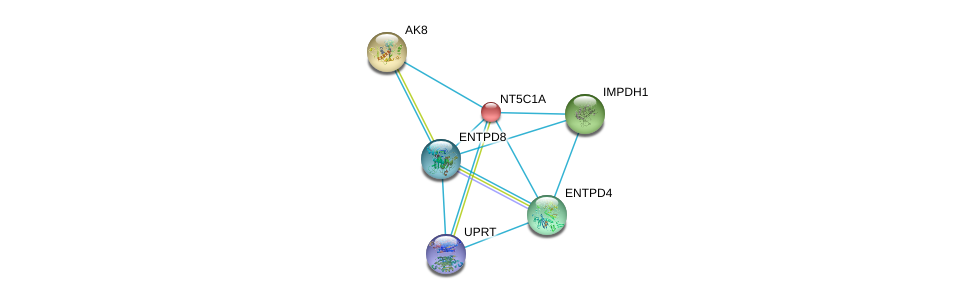 http://string-db.org/version_10/api/image/networkList?limit=0&targetmode=proteins&caller_identity=gene_cards&network_flavor=evidence&identifiers=9606.ENSP00000235628%0d%0a9606.ENSP00000345096%0d%0a9606.ENSP00000362481%0d%0a9606.ENSP00000351520%0d%0a9606.ENSP00000298545%0d%0a9606.ENSP00000360561%0d%0a