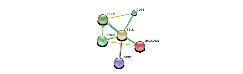 http://string-db.org/version_10/api/image/networkList?limit=0&targetmode=proteins&caller_identity=gene_cards&network_flavor=evidence&identifiers=9606.ENSP00000236147%0d%0a9606.ENSP00000263686%0d%0a9606.ENSP00000278927%0d%0a9606.ENSP00000215637%0d%0a9606.ENSP00000310036%0d%0a9606.ENSP00000339007%0d%0a