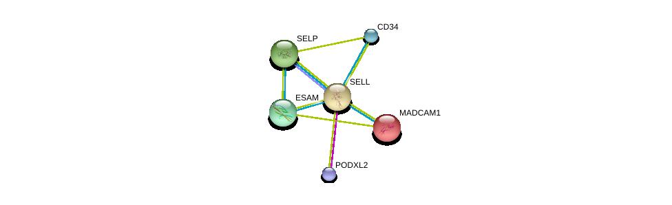 http://string-db.org/version_10/api/image/networkList?limit=0&targetmode=proteins&caller_identity=gene_cards&network_flavor=evidence&identifiers=9606.ENSP00000236147%0d%0a9606.ENSP00000263686%0d%0a9606.ENSP00000278927%0d%0a9606.ENSP00000215637%0d%0a9606.ENSP00000310036%0d%0a9606.ENSP00000345359%0d%0a