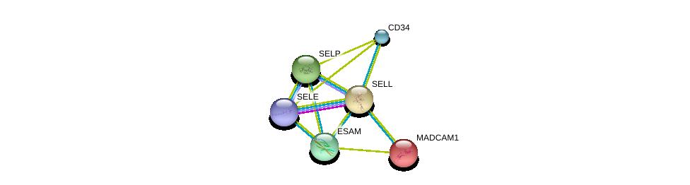 http://string-db.org/version_10/api/image/networkList?limit=0&targetmode=proteins&caller_identity=gene_cards&network_flavor=evidence&identifiers=9606.ENSP00000236147%0d%0a9606.ENSP00000278927%0d%0a9606.ENSP00000263686%0d%0a9606.ENSP00000310036%0d%0a9606.ENSP00000215637%0d%0a9606.ENSP00000331736%0d%0a