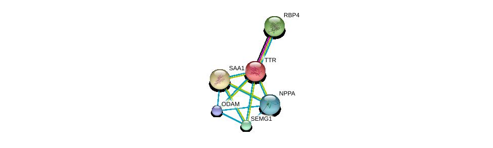 http://string-db.org/version_10/api/image/networkList?limit=0&targetmode=proteins&caller_identity=gene_cards&network_flavor=evidence&identifiers=9606.ENSP00000237014%0d%0a9606.ENSP00000360519%0d%0a9606.ENSP00000361867%0d%0a9606.ENSP00000365663%0d%0a9606.ENSP00000379401%0d%0a9606.ENSP00000348918%0d%0a