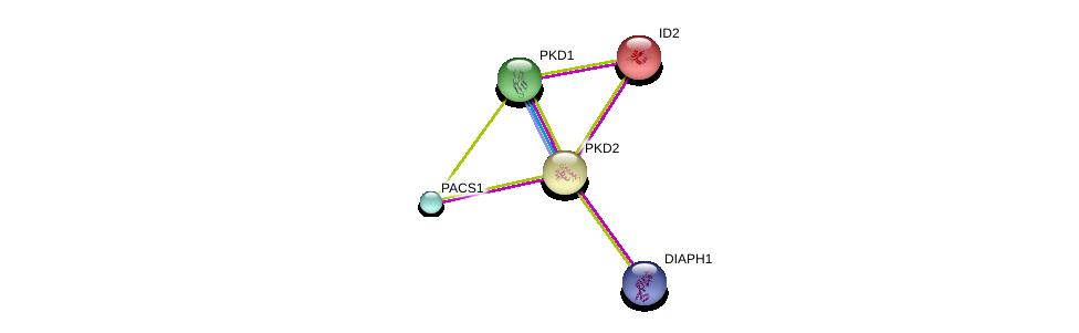 http://string-db.org/version_10/api/image/networkList?limit=0&targetmode=proteins&caller_identity=gene_cards&network_flavor=evidence&identifiers=9606.ENSP00000237596%0d%0a9606.ENSP00000262304%0d%0a9606.ENSP00000262304%0d%0a9606.ENSP00000381565%0d%0a9606.ENSP00000234091%0d%0a9606.ENSP00000316454%0d%0a