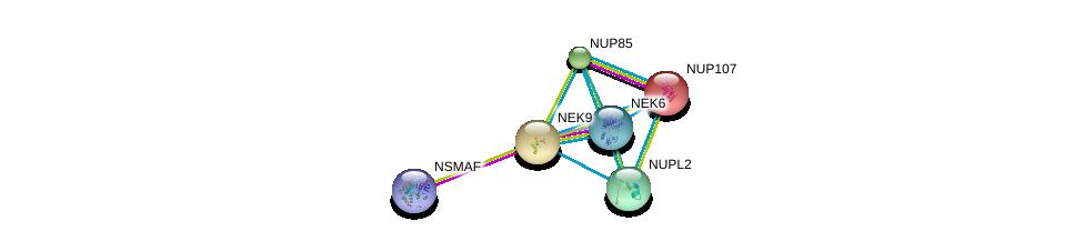 http://string-db.org/version_10/api/image/networkList?limit=0&targetmode=proteins&caller_identity=gene_cards&network_flavor=evidence&identifiers=9606.ENSP00000238616%0d%0a9606.ENSP00000411012%0d%0a9606.ENSP00000362702%0d%0a9606.ENSP00000245544%0d%0a9606.ENSP00000229179%0d%0a9606.ENSP00000258742%0d%0a