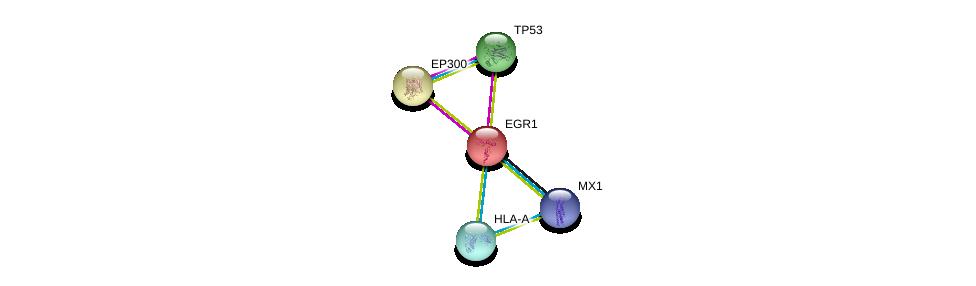 http://string-db.org/version_10/api/image/networkList?limit=0&targetmode=proteins&caller_identity=gene_cards&network_flavor=evidence&identifiers=9606.ENSP00000239938%0d%0a9606.ENSP00000269305%0d%0a9606.ENSP00000263253%0d%0a9606.ENSP00000263253%0d%0a9606.ENSP00000366005%0d%0a9606.ENSP00000381599%0d%0a