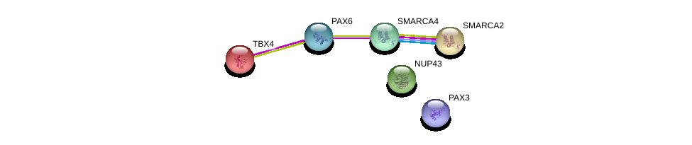 http://string-db.org/version_10/api/image/networkList?limit=0&targetmode=proteins&caller_identity=gene_cards&network_flavor=evidence&identifiers=9606.ENSP00000240335%0d%0a9606.ENSP00000368401%0d%0a9606.ENSP00000342262%0d%0a9606.ENSP00000265773%0d%0a9606.ENSP00000350720%0d%0a9606.ENSP00000375921%0d%0a