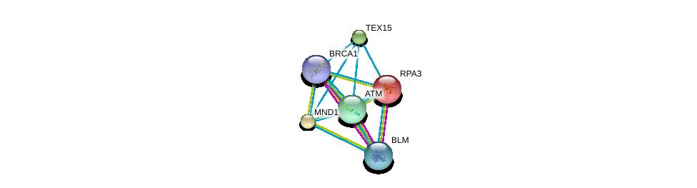 http://string-db.org/version_10/api/image/networkList?limit=0&targetmode=proteins&caller_identity=gene_cards&network_flavor=evidence&identifiers=9606.ENSP00000240488%0d%0a9606.ENSP00000256246%0d%0a9606.ENSP00000278616%0d%0a9606.ENSP00000418960%0d%0a9606.ENSP00000223129%0d%0a9606.ENSP00000347232%0d%0a