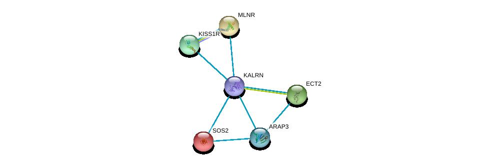 http://string-db.org/version_10/api/image/networkList?limit=0&targetmode=proteins&caller_identity=gene_cards&network_flavor=evidence&identifiers=9606.ENSP00000240874%0d%0a9606.ENSP00000216373%0d%0a9606.ENSP00000218721%0d%0a9606.ENSP00000232458%0d%0a9606.ENSP00000234371%0d%0a9606.ENSP00000239440%0d%0a