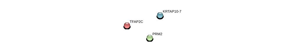 http://string-db.org/version_10/api/image/networkList?limit=0&targetmode=proteins&caller_identity=gene_cards&network_flavor=evidence&identifiers=9606.ENSP00000241808%0d%0a9606.ENSP00000201031%0d%0a9606.ENSP00000369445%0d%0a