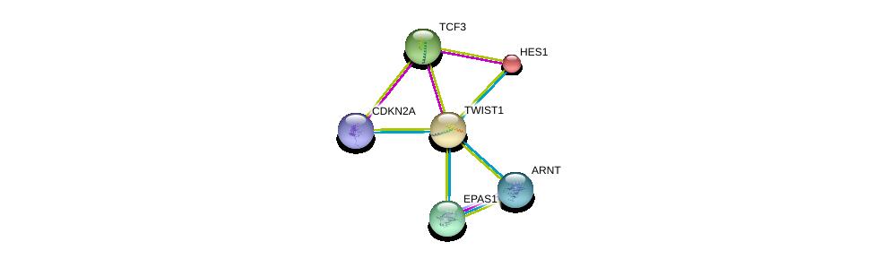 http://string-db.org/version_10/api/image/networkList?limit=0&targetmode=proteins&caller_identity=gene_cards&network_flavor=evidence&identifiers=9606.ENSP00000242261%0d%0a9606.ENSP00000351407%0d%0a9606.ENSP00000394932%0d%0a9606.ENSP00000232424%0d%0a9606.ENSP00000263734%0d%0a9606.ENSP00000262965%0d%0a